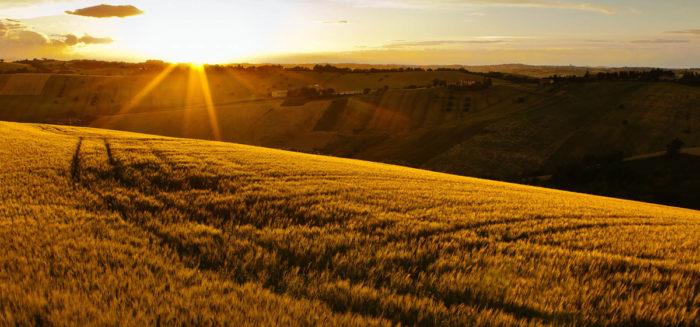 Tahıl Nasıl Toprakta Yetişir Bilgi Fayda